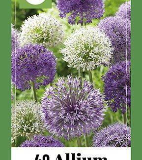 Česnek Purple-White Mix (40 cibulí, směs, XXL síťka)